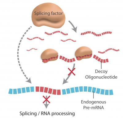 RNA-binding.jpg