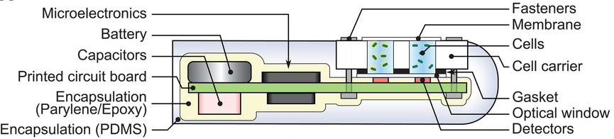 bacteria-on-a-chip1.jpg