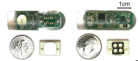 bacteria-on-a-chip2.jpg