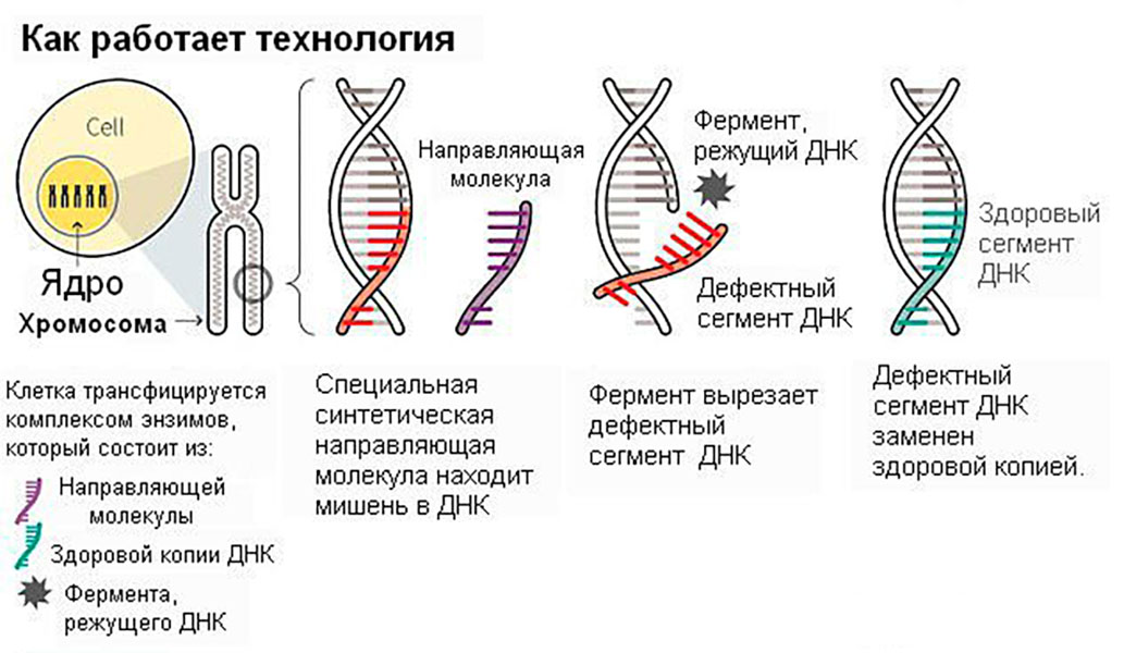 thalassaemia.jpg
