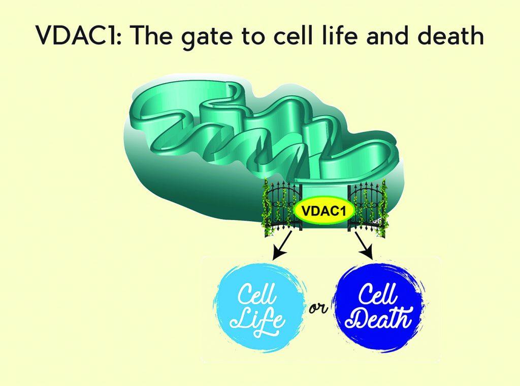 VDAC-1.jpg