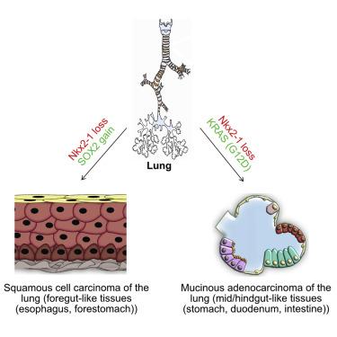 Lung-Gut.jpg