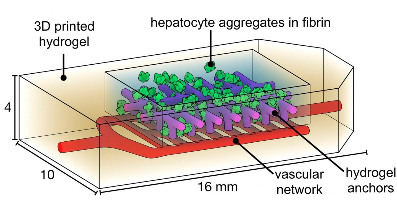 bioprinting2.jpg